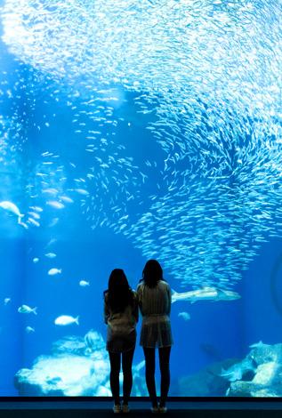 白い鳥居と青い海